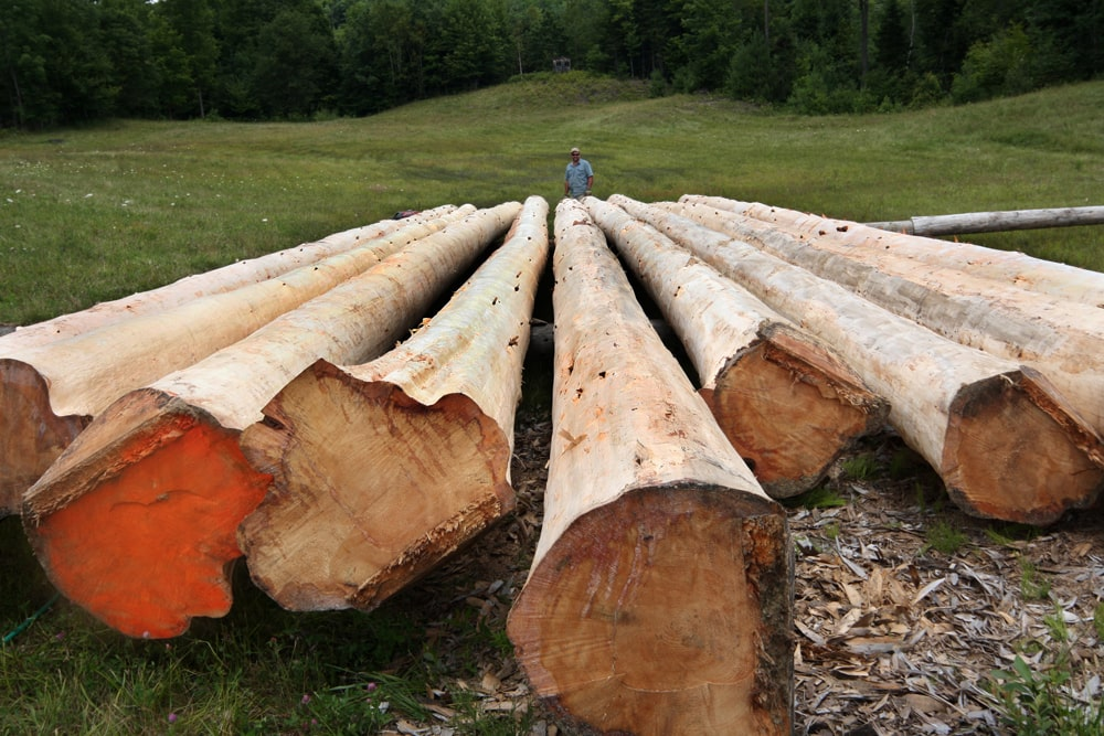 Large logs used for building log cabin